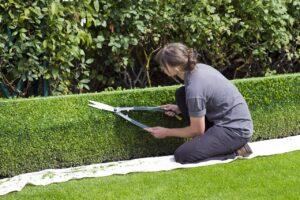 Read more about the article Quand faut-il tailler ses haies dans son jardin ?